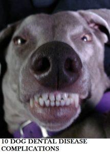 dog-dental-disease-complications