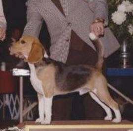 dog show judge