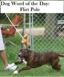 flirt-pole