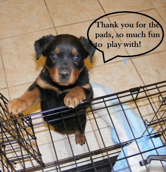 puppy-pads-pee