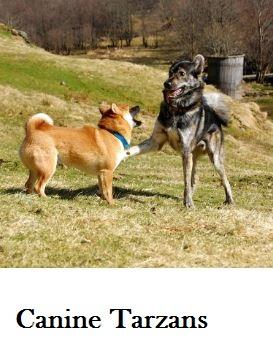 tarzan-dog