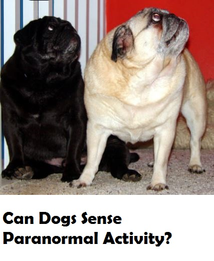 can-dogs-sense-ghosts