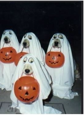 dog-ghost-activity
