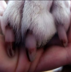 dog-nails-colors
