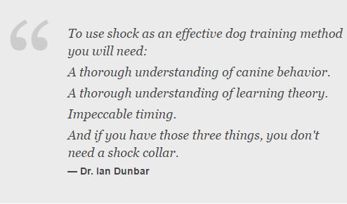 dog-shock