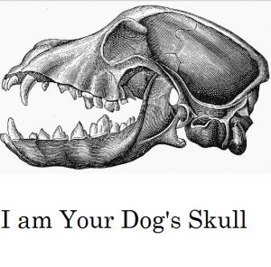 dog-skull-anatomy