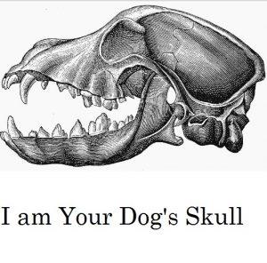 dog-skull-anatomy