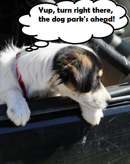 dog-whining-from-excitement