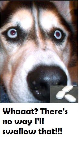 Dog Wont Eat Pills