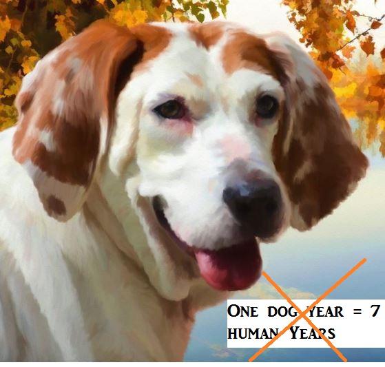 dog-age