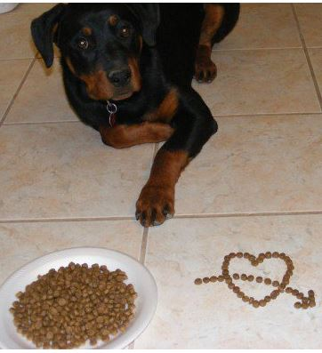 Ready for a dog food buffet?