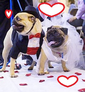 dog-married
