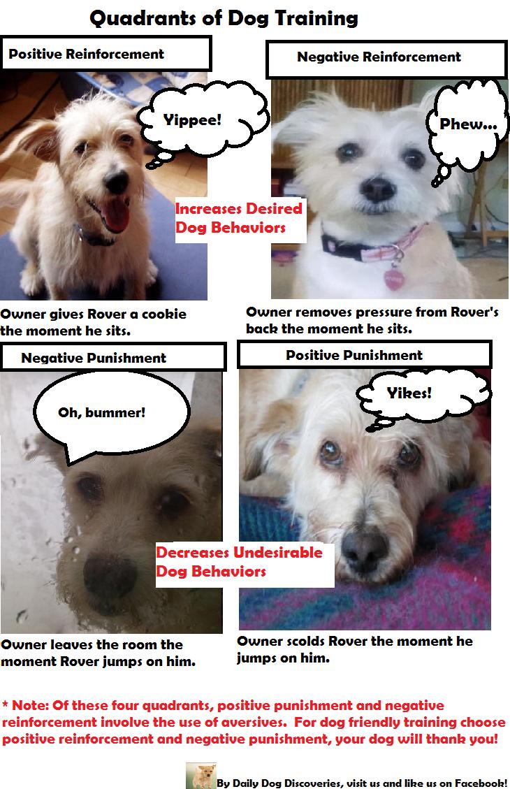 How Dogs Learn - Mary R. Burch, Jon S. Bailey, PhD ...