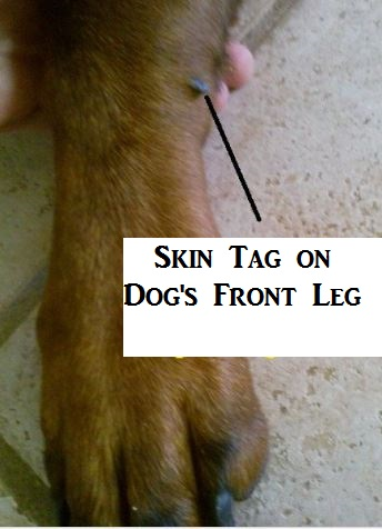skin-tag-on-dog-leg