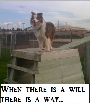dog-climbing
