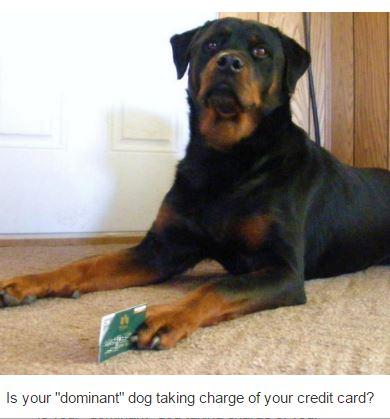 dominant-dog