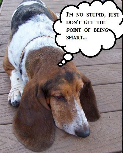 stupid-dog